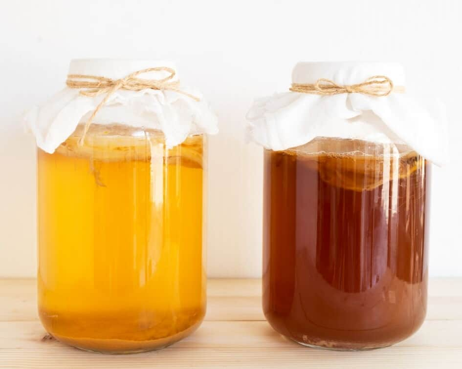 kombucha with SCOBYs