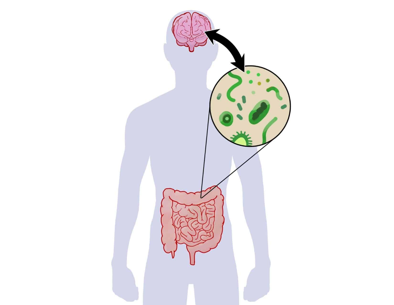 the gut brain axis in autism and ADHD